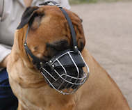 Wire Basket Dog Muzzle for Breeds With Broad Snout like Rottie