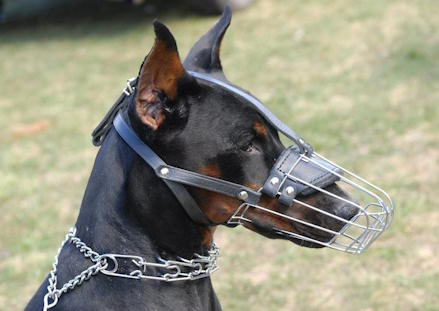 Can Dogs Bark While Wearing A Muzzle
