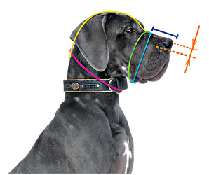 How to  measure your dog